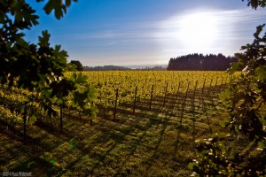 Sunrise on east view of Roserock Vineyard