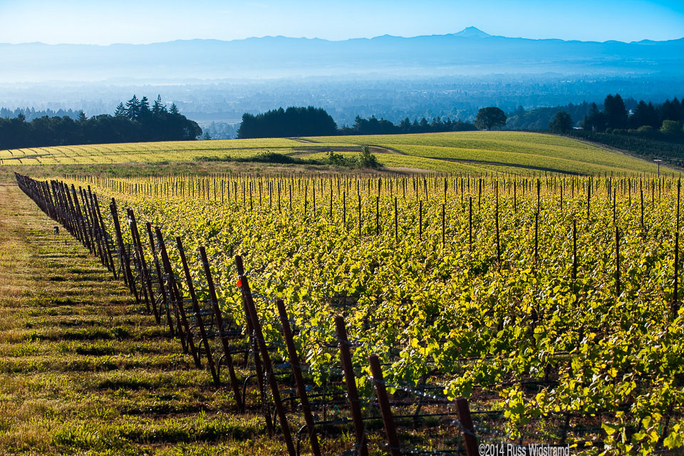Oregon's 279 acre Roserock vineyard benefits from volcanic soils from nearby Mt. Jefferson.